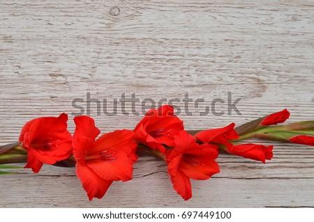 Flower Background #697449100