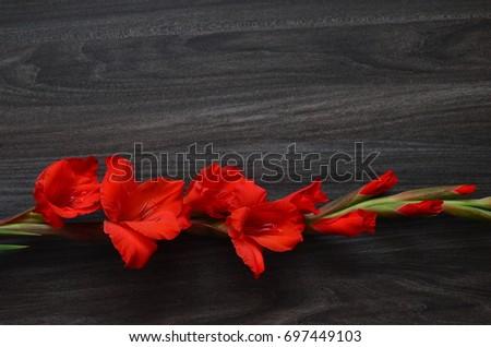 Flower Background #697449103