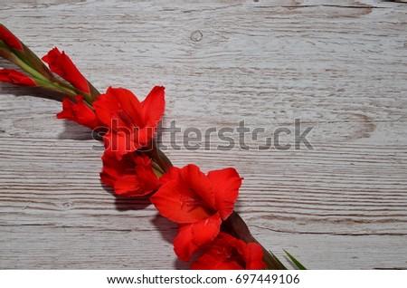Flower Background #697449106