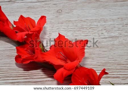 Flower Background #697449109