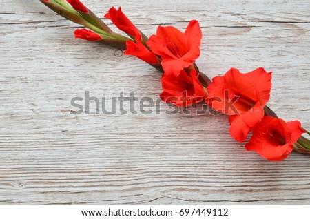 Flower Background #697449112