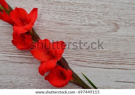 Flower Background #697449115