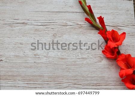 Flower Background #697449799