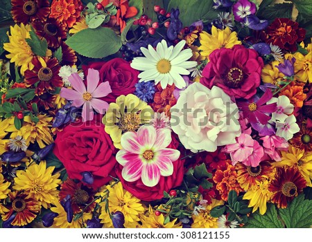 Flower background. A background from cultivated flowers, the top view.