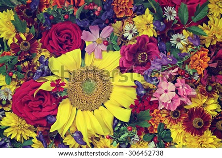 Flower background. A background from cultivated flowers, the top view, a close up.