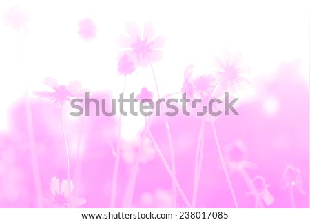 flower background. beautiful flowers made with color filters. #238017085