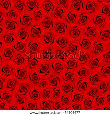 flower background. many red roses