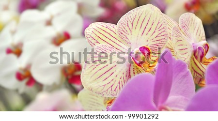 Flower background, orchids, nature beauty