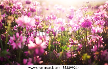 flower background with pink flowers