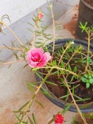 Flower beautiful   #flower  #beautifulflower ........