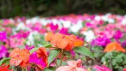 Flower bed short focal length