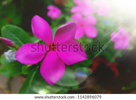 flower blossom purple floral blosso. background