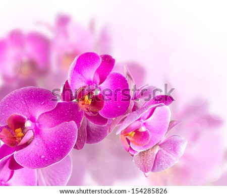 Flower blossoming orchids on a blurred background