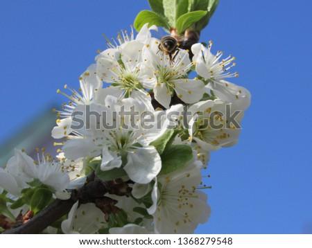 flower botany  bee #1368279548