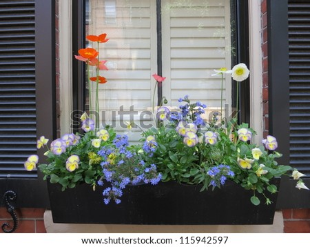 Flower box in window of a brownstone building