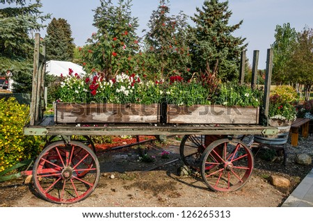 Flower boxes with red and white flowers sitting on a railroad baggage cart while the sprinklers are on