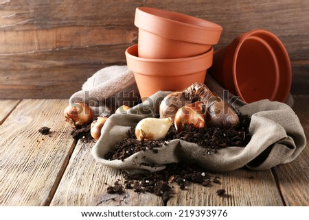 Flower bulbs, pots and soil on sackcloth napkin on wooden table on wooden wall background #219393976