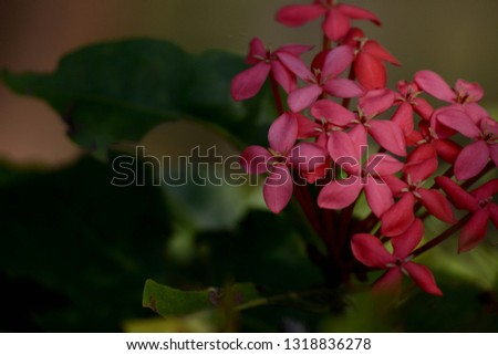 Flower bunches, india. #1318836278