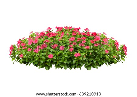 flower bush tree isolated tropical plant with clipping path #639210913