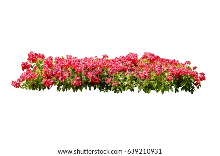 flower bush tree isolated tropical plant with clipping path #639210931