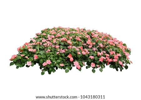 flower bush tree isolated with clipping path #1043180311