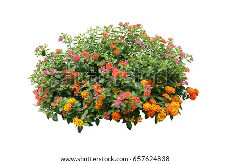 flower bush tree isolated with clipping path #657624838
