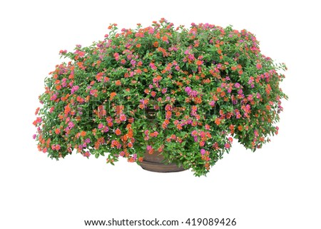 Flower bush with pot isolated on white background #419089426