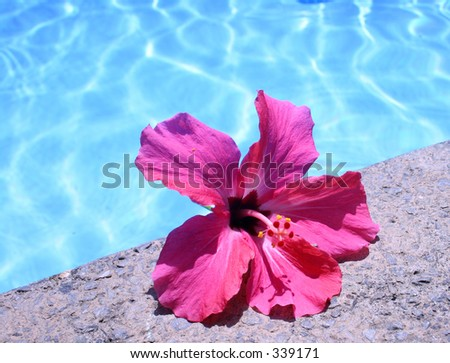 Flower By Pool - stock photo