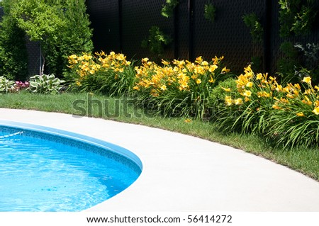 Flower by the pool