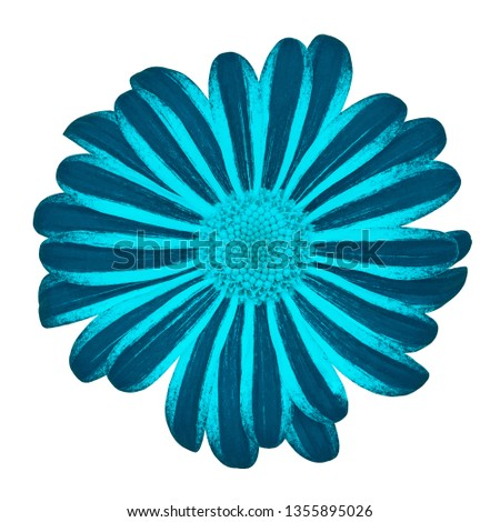 Flower cerulean cyan daisy isolated on white background with clipping path. Close-up. Nature. #1355895026