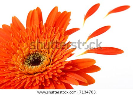 flower close-up with leafs flying - stock photo