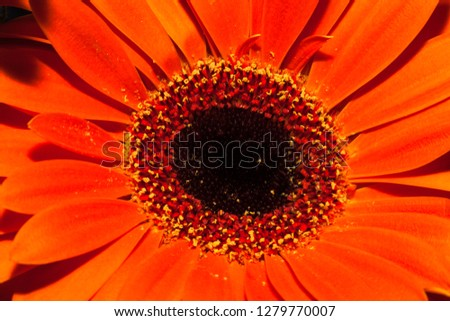 Flower closeup for natural background. Selective focus. #1279770007