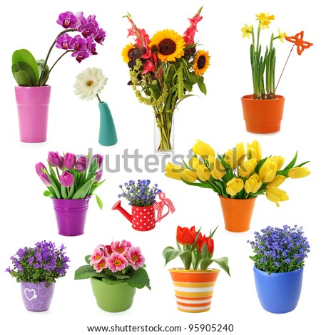 Flower collection isolated on white background #95905240