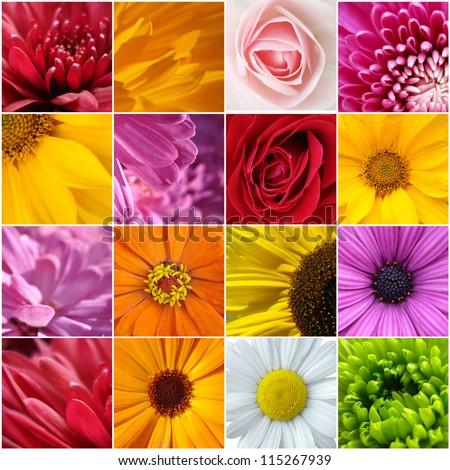 Flower color wallpaper