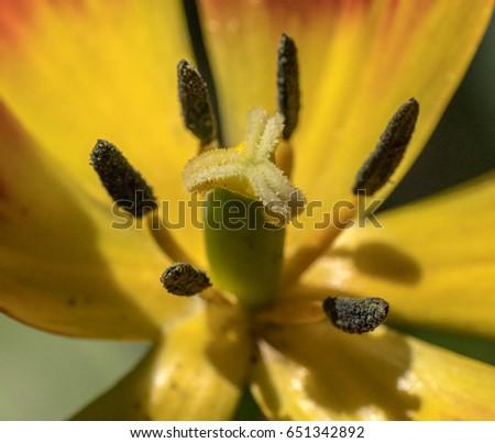 Flower detail #651342892