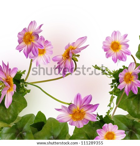 Flower exotic border