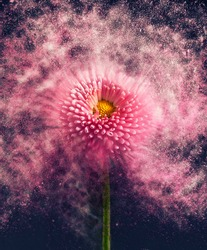 Flower - exploding