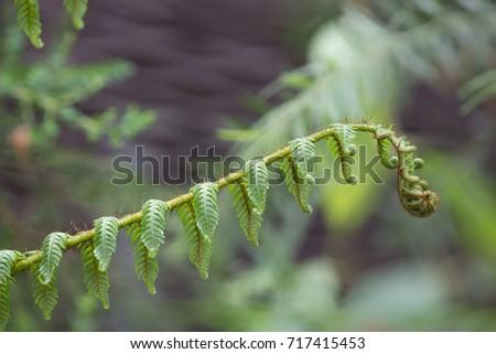 Flower - Ferns (Macro)