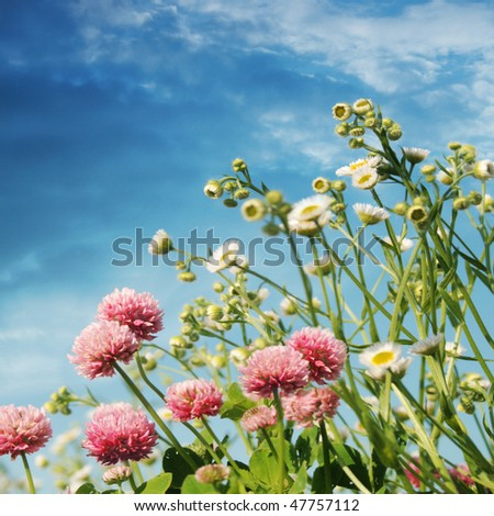 Flower field and blue sky. - stock photo