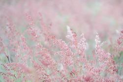 Flower field blowed by wind in summer.Scenery view of beautiful wildflower field in morning.Pink flowers field landscape