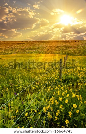 Flower, field, fence at sunrise