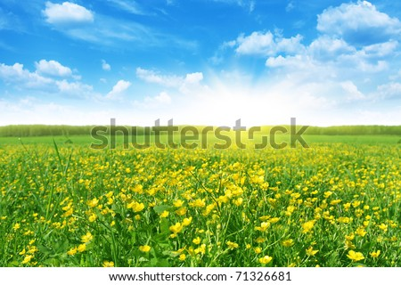 Flower field in spring time. - stock photo