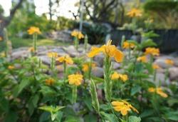 flower field in the garden from Thailand
