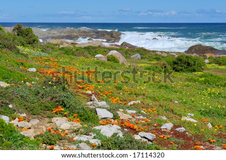Flower field next to sea. Shot in West Coast National Park, near Langebaan, Western Cape, South Africa.