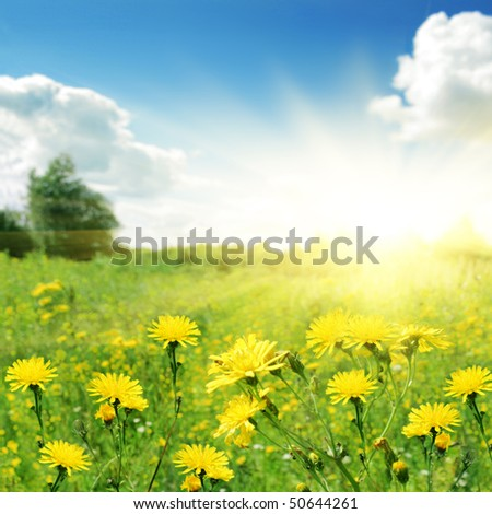 Flower field on summer day. - stock photo
