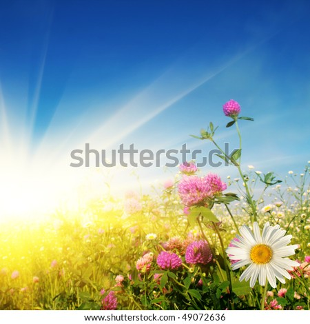 Flower field on sunny day. - stock photo