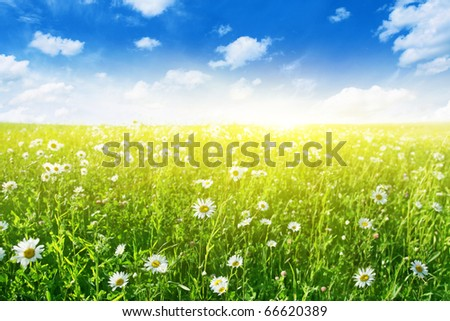 Flower field on sunny day.