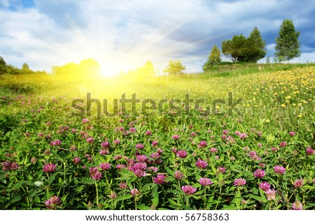 Flower field ,trees and sun.