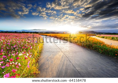 flower field with blue sky in the sunny morning
