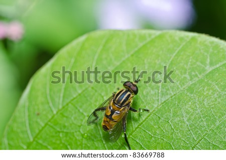 Flower files or Fruit flies in green nature or around on flower
